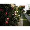 Private house for rent in Ortachala